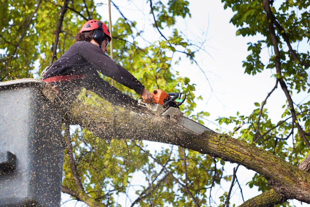 man cutting tree branch with chainsaw