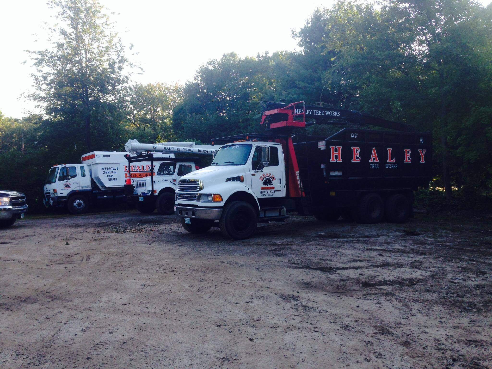 tree-service-3-large