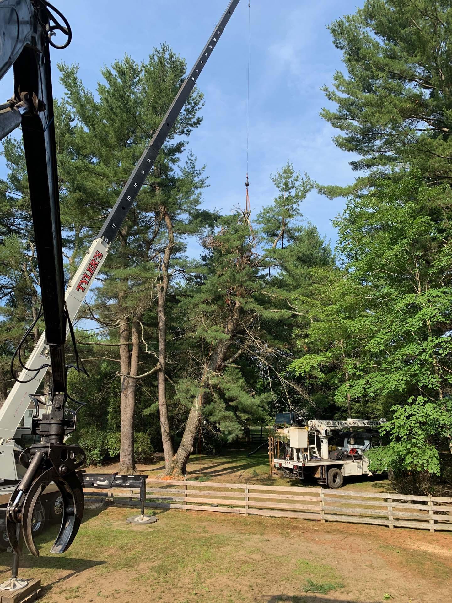 crane moving fallen tree